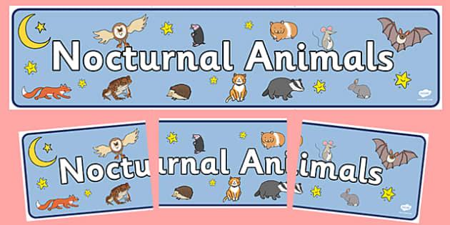 Nocturnal Animals Display Banner - Animals, animal, nocturnal, class, class banner, class display, classroom banner, classroom areas signs, areas, display banner, display