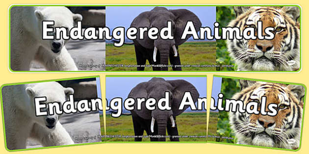 Endangered Animals Photo Display Banner - endangered animals, photo display banner, photo banner, display banner, banner,  banner for display, display photo