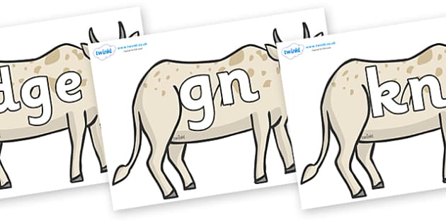 Silent Letters on African Ox - Silent Letters, silent letter, letter blend, consonant, consonants, digraph, trigraph, A-Z letters, literacy, alphabet, letters, alternative sounds