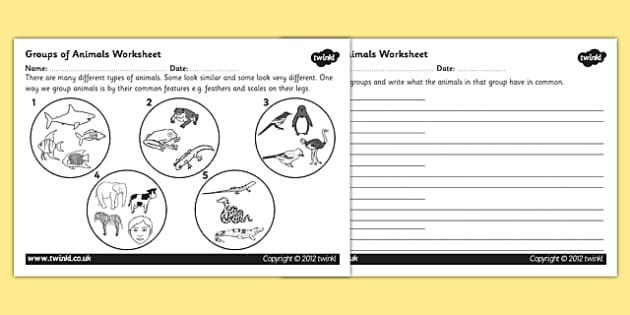 Animal Groups Worksheet animals living things classifying – Introduction to Animals Worksheet