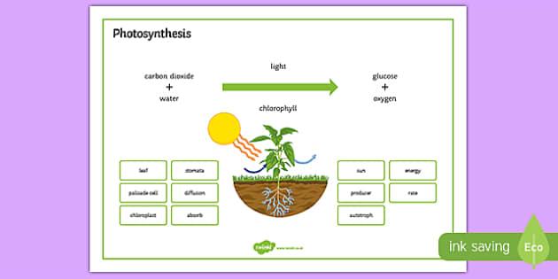 Photosynthesis Word Mat