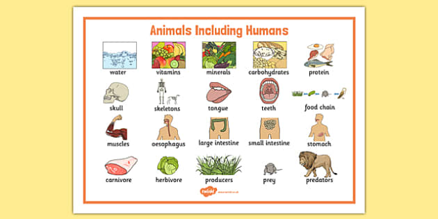 Animals Including Humans Year 3 and 4 Word Mat - animals including humans, year 3, year 4, word mat