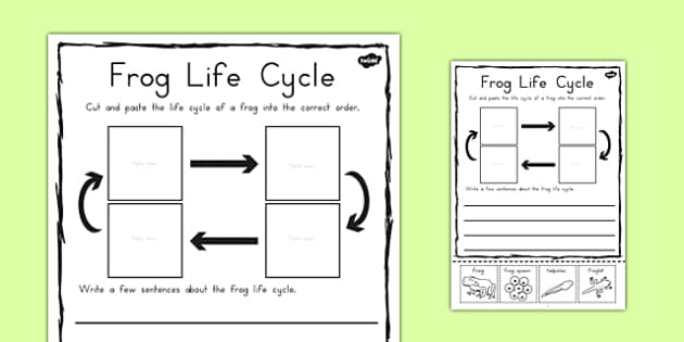 Frog Life Cycle Sentence Writing Activity Sheet - australia, frog, worksheet