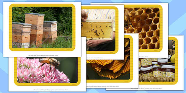 Honey Photo Display Pack  - honey, photo, display pack, display, pack, judaism