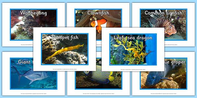 Australian Fish Display Photos - australia, animals, fish, display photos, display