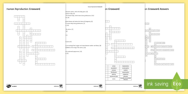 KS3 Human Reproduction Crossword
