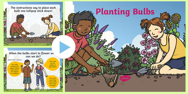 Planting Bulbs Numeracy PowerPoint - Planting, Bulbs, Numeracy, Growth.