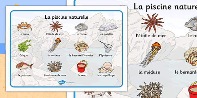 Seaside Rockpool Word Mat French - french, seaside, beach, seaside word mat, rockpool word mat, rock pool word mat, seaside key words, seaside words, beach words