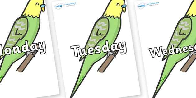 Days of the Week on Budgies - Days of the Week, Weeks poster, week, display, poster, frieze, Days, Day, Monday, Tuesday, Wednesday, Thursday, Friday, Saturday, Sunday