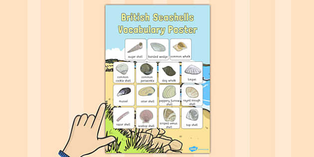 British Seashell Vocabulary Poster - british seashell, vocabulary