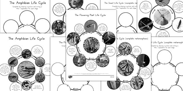 Year 5 Differentiated Life Cycles Activity Sheets - science, australia, animals, humans, life, death, change, path, ks2, junior, key stage 2, five, ability, activity