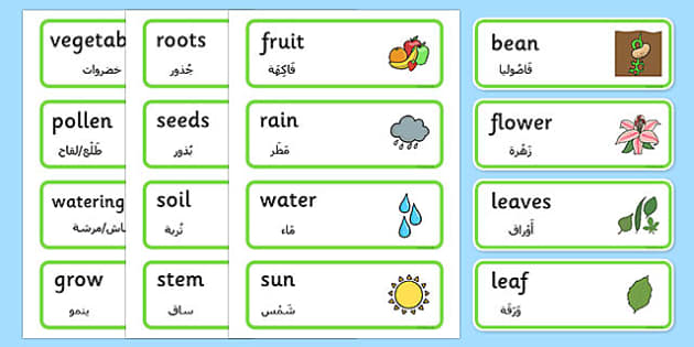 Growth Topic Word Cards Arabic Translation - EAL, translated, bilingual, plants, grow, science, nature