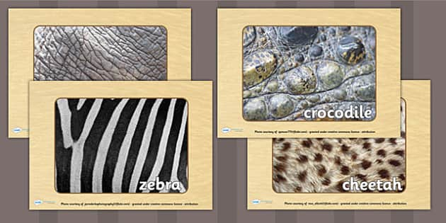 Safari Pattern Display Photos - jungle, animals, safari display