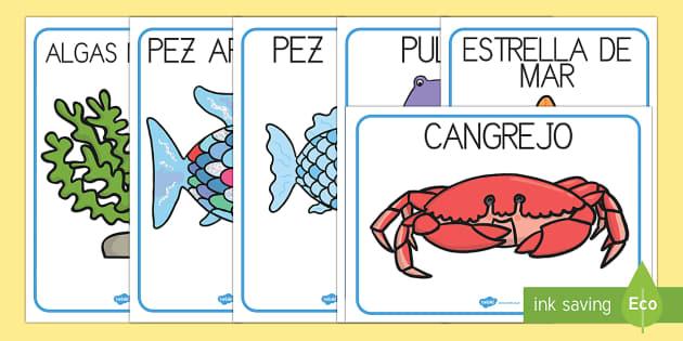 El pez arcoiris Tarjetas de vocabulario