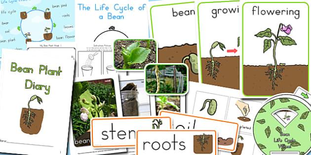 Bean Life Cycle Resource Pack - australia, bean, life cycle