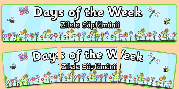 Days of the Week Display Banner Flower Background Romanian Translation - romanian, days, week, banner, display
