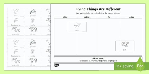 Living Things are Different Cut and Paste Activity Sheet - Australian Curriculum Biological sciences, fur, skin, scales, feathers, animals, animal skin, living