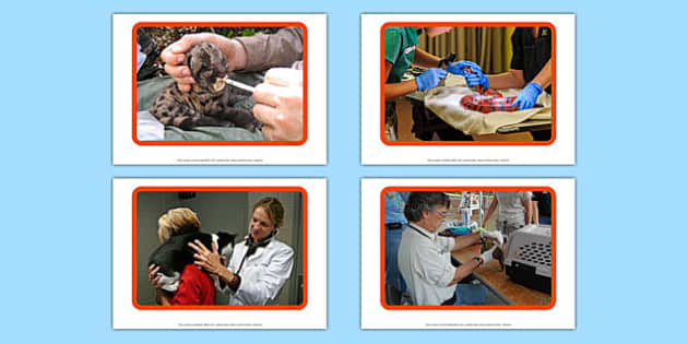 Vet Display Photos - Vet, Veterinary Nurse, Receptionist, Veterinary Surgery, examination, medicine, injection, dog, animals
