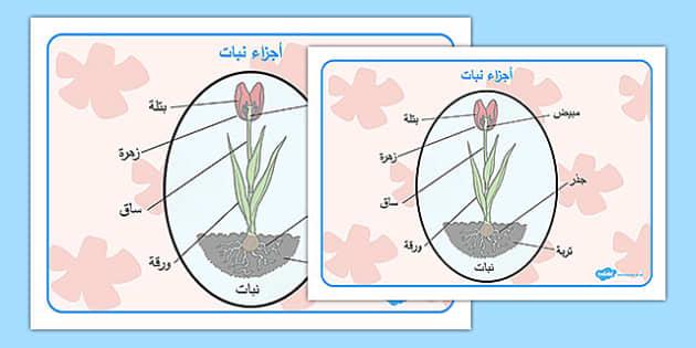 بساط مفردات أجزاء النبات - شبكة مفردات، النبات، وسائل تعليمية