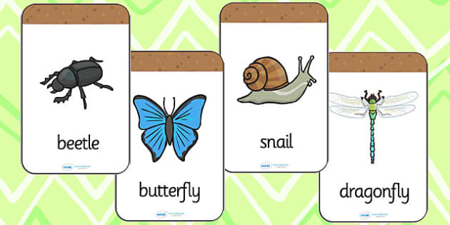 Minibeast Flashcards - minibeasts, flash cards, visual aids