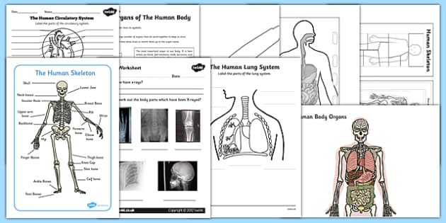 Top 10 KS2 Human Body Activity Pack-Australia