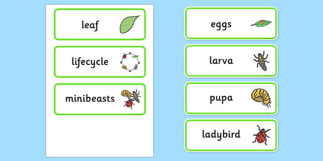 Ladybird Life Cycle Word Cards - Ladybird, life cycle, Minibeasts, word card, knowledge and understanding of the world, investigation, living things, snail, bee, ladybird, butterfly, spider