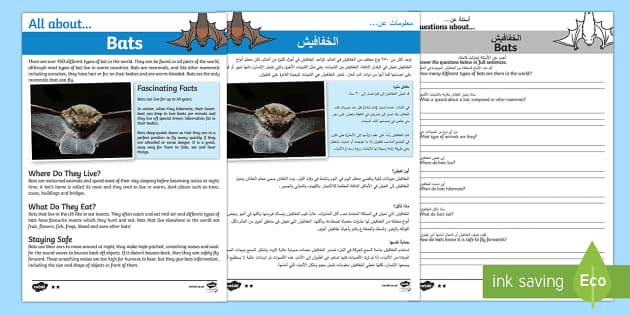 Bats Reading Comprehension Pack Arabic/English - Bats Reading Comprehension - bats, reading, comprehension, read, comprehesion, comprehnsion, reading