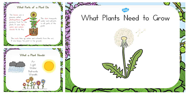 What Plants Need to Grow PowerPoint - australia, plant, grow, need