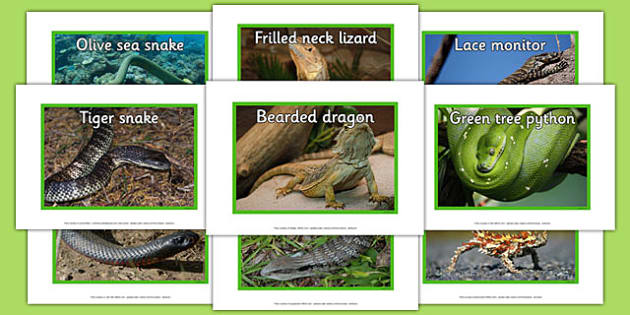 Australian Reptiles Display Photos - australia, reptiles, display photos, display, photos