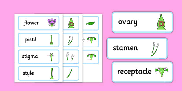 Parts of a Flower Word Cards - parts, flower, word cards, word, cards, plants