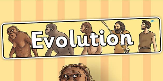 Evolution Display Banner - banner, evolution, display banner