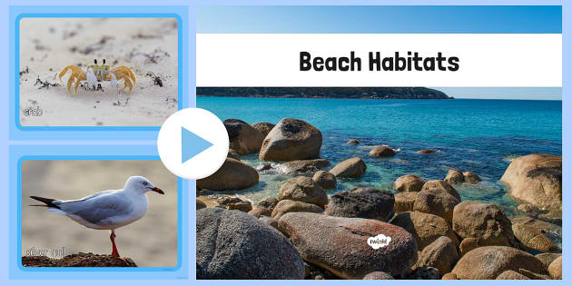 Beach Habitat Photo PowerPoint - australia, Science, Year 1, Habitats, Australian Curriculum, Beach, Living, Living Adventure, Good to Grow, Ready Set Grow, Life on Earth, Environment, Living Things, Animals, Plants, Photos, Photographs, PowerPoint