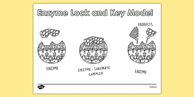 KS4 Science Revision Colouring Enzyme Lock and Key Model - ks4, science, revision, colouring, enzyme, lock and key, model