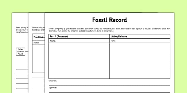 Differentiated Fossil Record Activity Sheet - evolution, fossils, fossilisation, plants, animals, worksheet