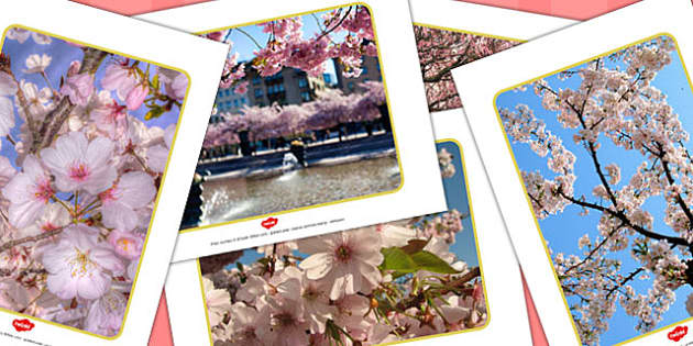 Chinese Blossom Tree Display Photos - chinese, blossom, display