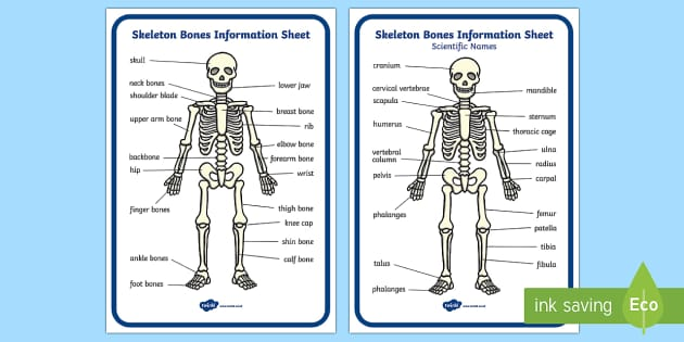 Skeleton Information Sheet