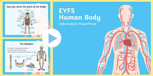 EYFS Human Body Information PowerPoint