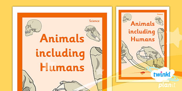 PlanIt - Science Year 4 - Animals Including Humans Unit Book Cover - planit, science, year 4, book cover, animals including humans