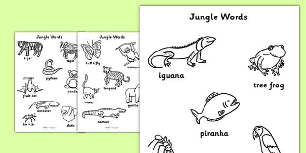 Jungle Words Colouring Sheets - jungle, animals, colouring, sheet