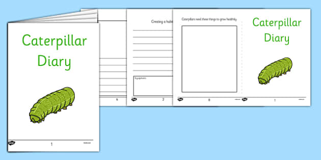 Caterpillars Diary Writing Frames - caterpillar, observation, diary, writing frames, minibeast