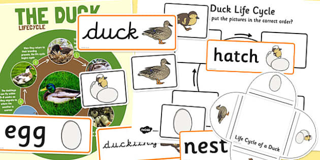 Duck Life Cycle Resource Pack