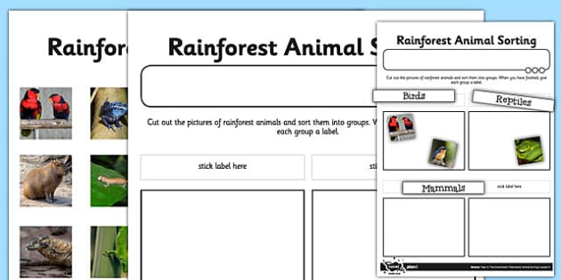 Rainforest Animals Sorting Activity Sheet - rainforest, animals, sorting, activity, sheet, worksheet