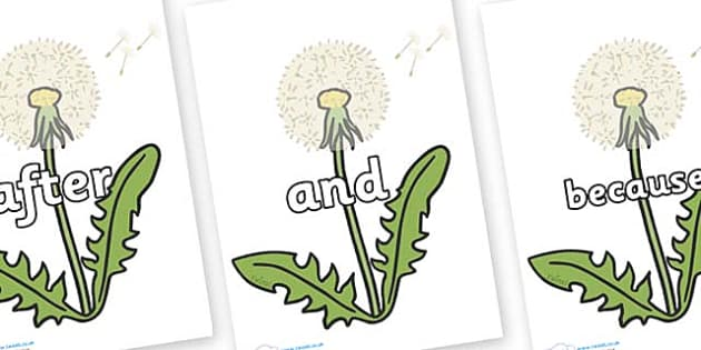 Connectives on Dandelion Seeds - Connectives, VCOP, connective resources, connectives display words, connective displays