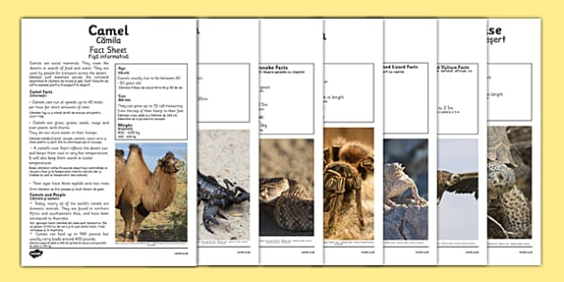Desert Animals Fact Sheets Romanian Translation - romanian, desert animals, desert, animals, fact sheets, fact, sheets