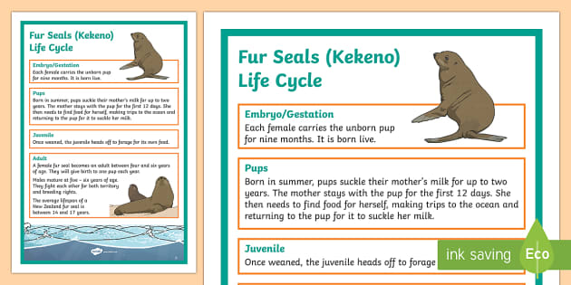 NZ Fur Seal / Kekeno Life Cycle Display Poster