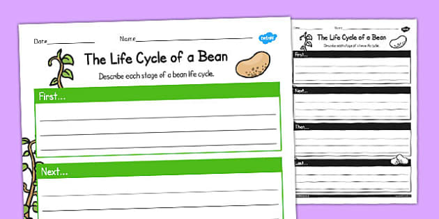 The Life Cycle of a Bean Writing Frame - writing, frame, cycle