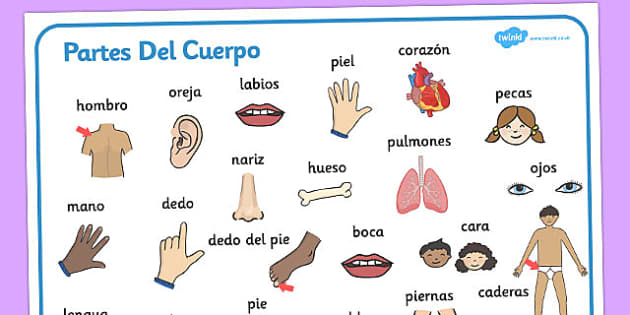 Partes Del Cuerpo Word Mat Spanish - spanish, my body, word mat, word, mat, bodies