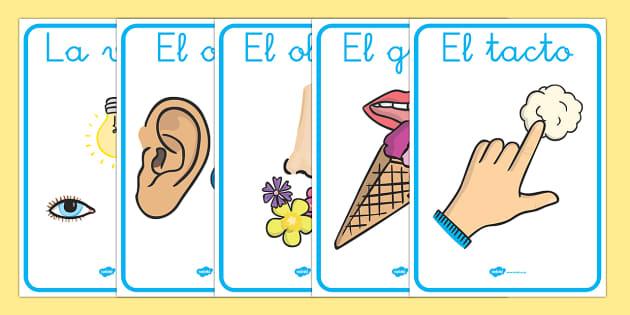 Los sentidos Poster DIN A4