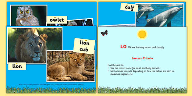 Animals Including Humans Offspring Lesson PowerPoint - animal