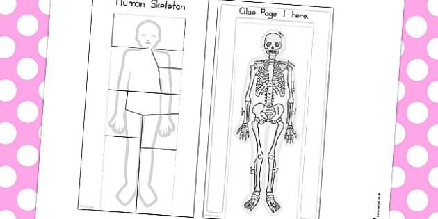 Human Skeleton Interactive Visual Aid - australia, skeleton, aid